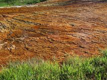 nationalpark yellowstone Royaltyfria Foton
