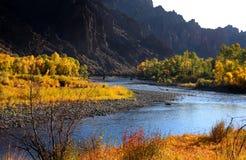 nationalpark yellowstone Fotografering för Bildbyråer