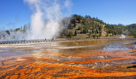 nationalpark yellowstone Arkivbild