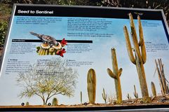 Nationalparkarizona-Staats-USA-Markierung des Saguaro Stockfoto