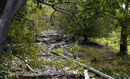 nationalparkbana yosemite Arkivbild