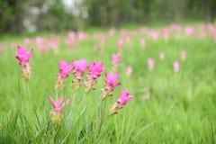 Nationalparken för Krajeo fältPA Hin Ngam lokaliseras i skogen, som lokaliseras i den härliga stenen Thep Sathit District, Cha royaltyfria foton