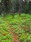 Nationalparken i Finland kallade nuuksio Royaltyfri Foto