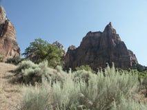 nationalparken vaggar zion Arkivfoto