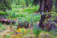 Nationalparker av Alaska royaltyfri fotografi