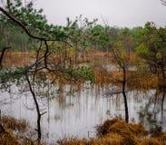 Nationalparkhed Fotografering för Bildbyråer