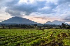 Nationalparklandschaft Virunga-Vulkans mit grünem Ackerlandfeld Lizenzfreies Stockfoto