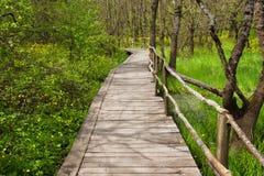 NationalparkRopotamo Bulgarien Träbron leder till skog för vår för Ropotamo flodkorsningen gräsplan Royaltyfri Bild