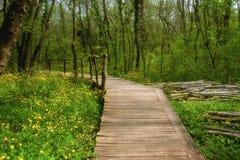 NationalparkRopotamo Bulgarien Träbron leder till skog för vår för Ropotamo flodkorsningen gräsplan Arkivbild