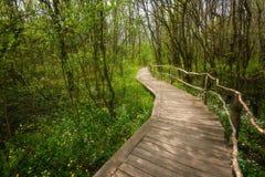 NationalparkRopotamo Bulgarien Träbron leder till skog för vår för Ropotamo flodkorsningen gräsplan Fotografering för Bildbyråer