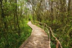 NationalparkRopotamo Bulgarien Träbron leder till skog för vår för Ropotamo flodkorsningen gräsplan Arkivfoton
