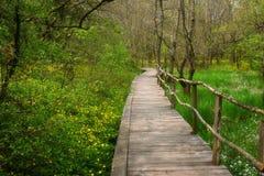 NationalparkRopotamo Bulgarien Träbron leder till skog för vår för Ropotamo flodkorsningen gräsplan Arkivfoto