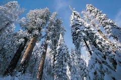 nationalparksequoia Arkivbilder