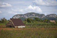 nationalparkvinales Arkivfoto