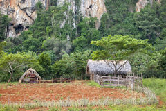 nationalparkvinales Arkivbild