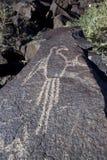 Nationell monument för Petroglyph Royaltyfria Foton