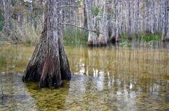 nationell preserve för stor cypress royaltyfri bild