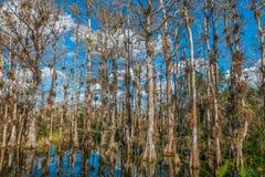 nationell preserve f?r stor cypress S?dra Florida USA fotografering för bildbyråer