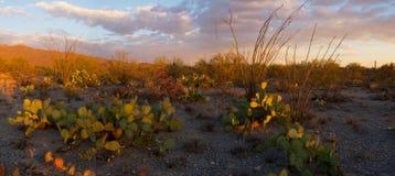 nationell saguarosolnedgång för monument Arkivfoton