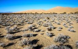 Nationell sylt för Mojave arkivbilder
