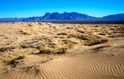 Nationell sylt för Mojave royaltyfri bild