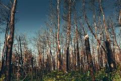 Nationella miljö- problem, miljöbelastning, död skog, skadlig produktion, barbarisk skogsavverkning, hotet till royaltyfri fotografi