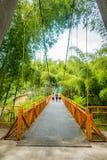 NATIONELLT KAFFE PARKERAR, COLOMBIA, gul gångare Arkivfoto