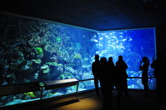 Nationellt museum av Marine Biology och akvariet royaltyfria foton