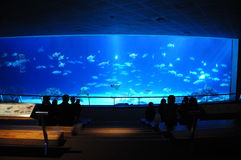 Nationellt museum av Marine Biology och akvariet arkivfoton