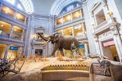 Nationellt museum av nationell historia royaltyfria foton