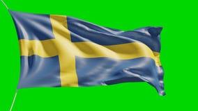 nationsflagga 4K av Sverige som smickrar på den gröna skärmen