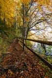 Natiral försök i höstlig skog arkivfoto