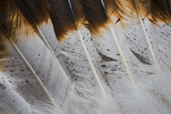 Native American Feather Textures. A close up photos of native american/western looking feathers with brown and white feather textures stock images