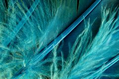 Native American Indian duck feathers detail. Royalty Free Stock Photos