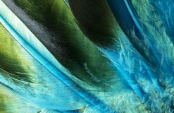 Native American Indian duck feathers detail. Royalty Free Stock Image