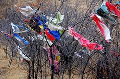 Free Native American Prayer Cloth Tied To Trees At Bear Butte Stock Images - 113699644