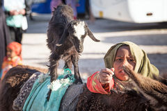 Native arabic woman donkey and goat Stock Photos