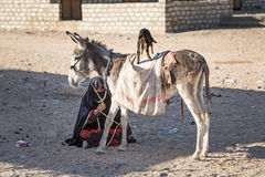 Native arabic woman with donkey and goat Stock Photo