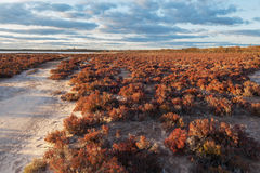 Native Australian beach shrubs landscape at sunset. Native Australian desert shrubs landscape at sunset. Murray-Sunset national park, Australia stock photos