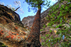 Native Australian Bush. In Blue Mountains Stock Photo