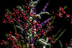 Native Australian flowering plants. stock image