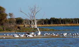 Native Birds Gathering, Western Australia Stock Photography