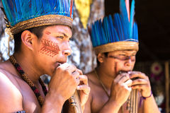 Native Brazilian guys playing wooden flute at an indigenous tribe in the Amazon.  stock image