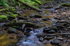Native Brook Trout Stream. Royalty Free Stock Images