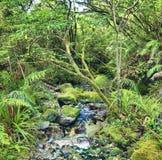 Native bush Royalty Free Stock Photography