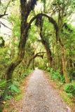 Native bush. Of New Zealand royalty free stock photos