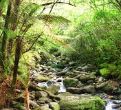 Native bush. Stream among New Zealand native bush Stock Photography
