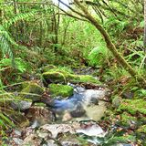 Native bush. Stream among New Zealand native bush Royalty Free Stock Photography