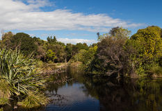 Native Bush Lake. Part of New Zealands wonderful native bush around a lake area Royalty Free Stock Image