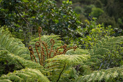 Native bush, New Zealand. Native bush of New Zealand Royalty Free Stock Photo